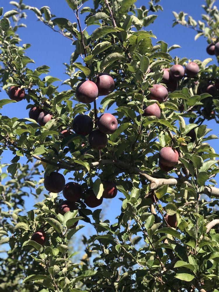 Autumn Hills Orchard: 495 Chicopee Row, Groton, MA