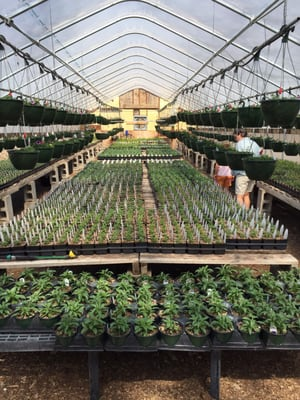 Photo Of Merv S Greenhouse And Nursery Hackensack Mn United States