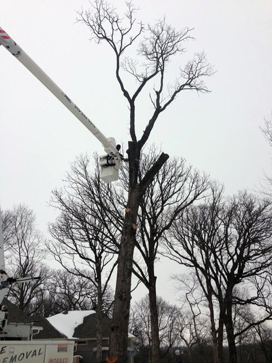 Kvale Tree Service: 2745 Calhoun Ave, Eagle Grove, IA