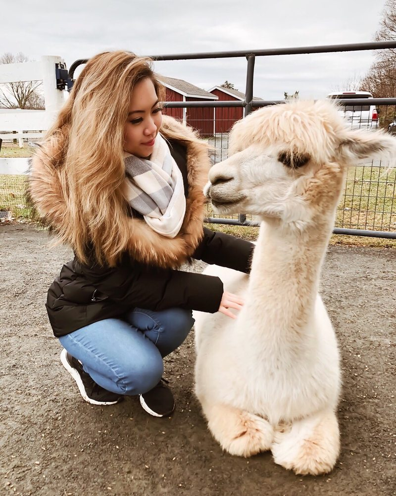 Bluebird Farm Alpacas