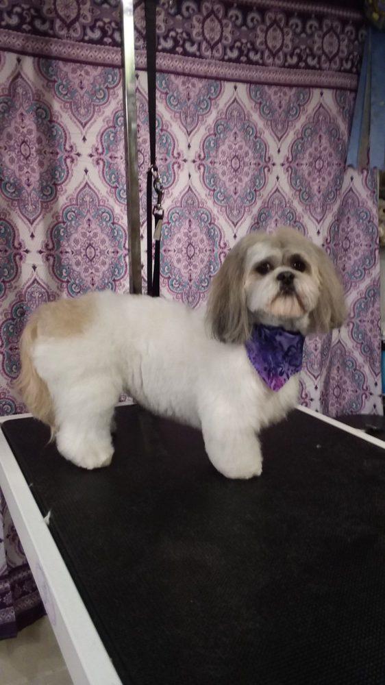 New Hope Pet Grooming: 115 C S Main St, New Hope, PA