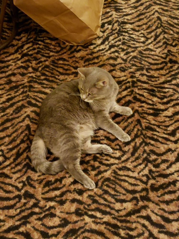 Cats Only: 3416 Orchard Heights Rd NW, Salem, OR