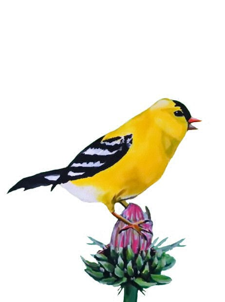 The Merry Goldfinch