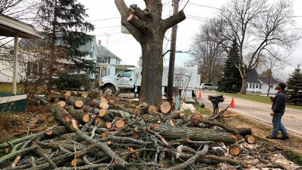 Discount Tree & Stump Removal: 4724 Lansing Rd, Bancroft, MI