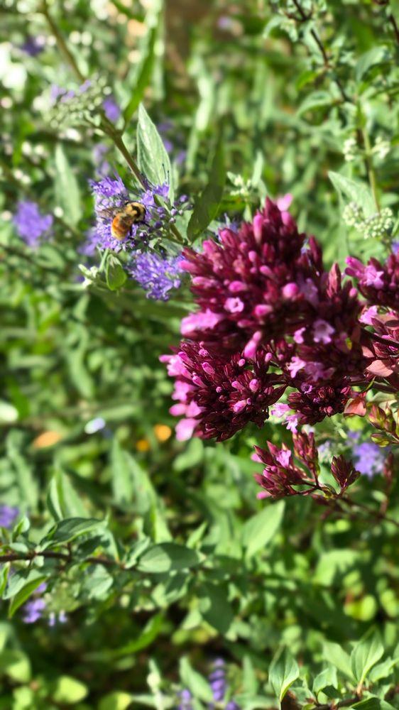 Helm Gardeners & Landscaping: 1254 S Balsam Ct, Lakewood, CO