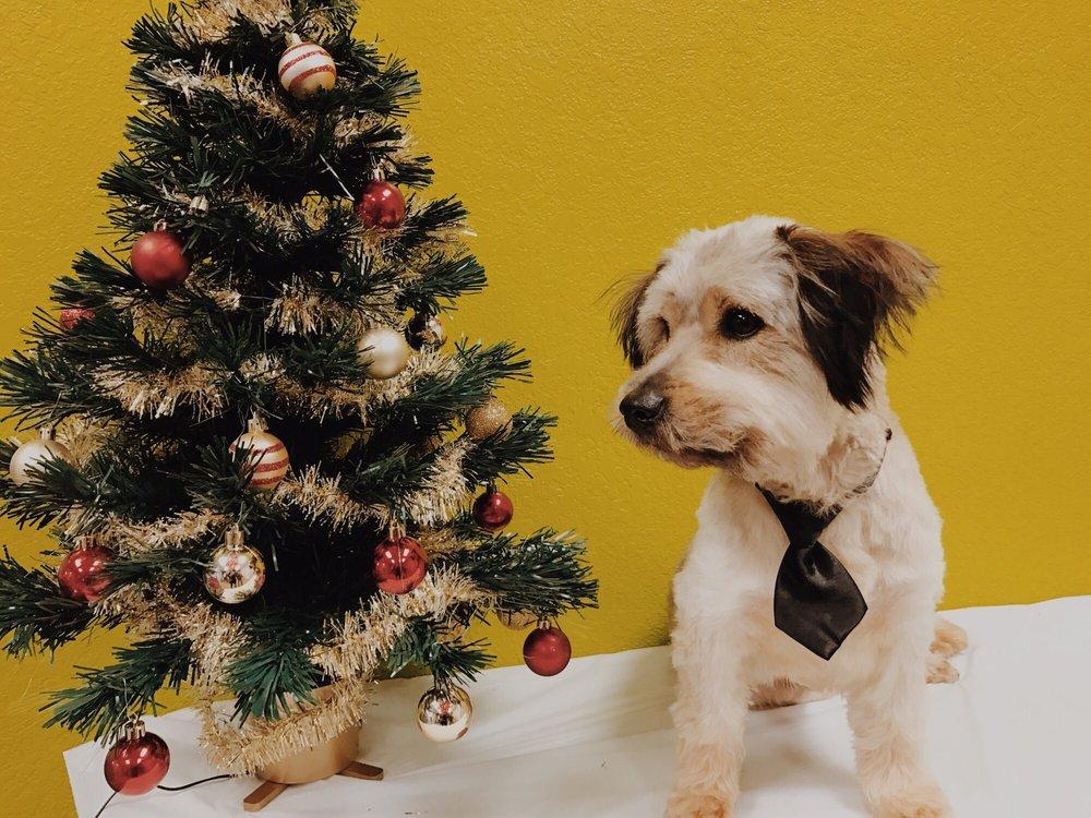 Chaneke's Dog Grooming: 1132 Sheldon Rd, Channelview, TX