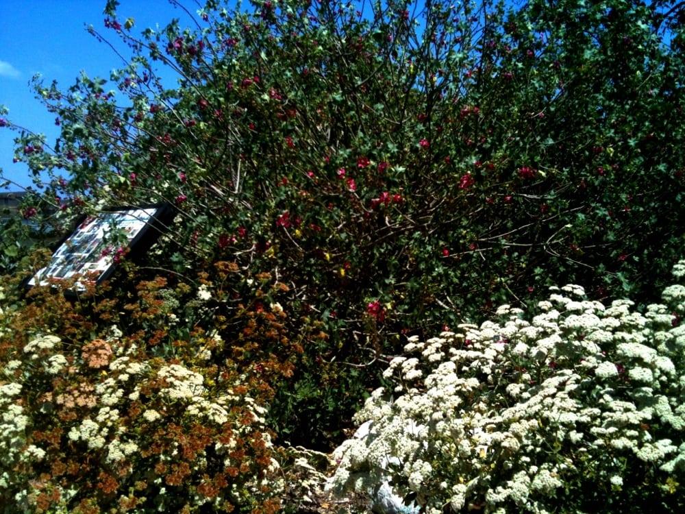 Photos for manhattan beach botanical garden yelp - Manhattan beach botanical garden ...