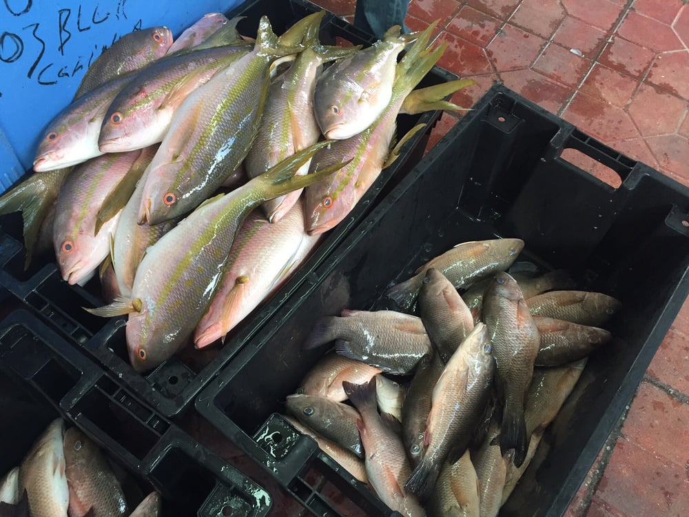 Fresh yellow tail from key west lb yelp for Key west fish market