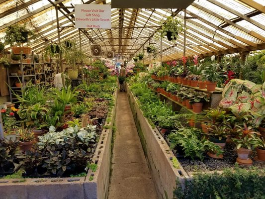 Campbell S Greenhouses 209 Mcdonald Ave Charlotte Nc Nurseries Mapquest