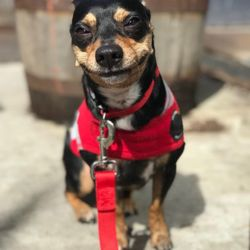 NYC Pooch - 34 Photos & 37 Reviews - Dog Walkers - 235 W