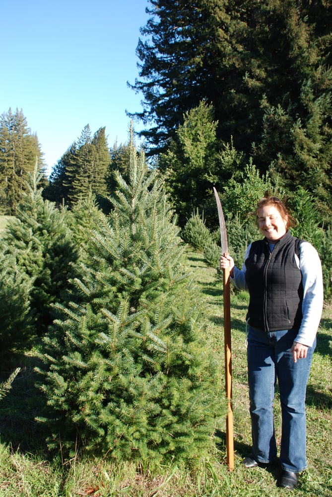 ward ranch christmas tree farm temp closed christmas trees 4820 bonny doon rd santa cruz ca phone number yelp