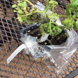 Photo Of Burgess Seeds U0026 Plant   Bloomington, IL, United States. My Plants