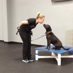 Zoom Room Dog Training - 150 Photos & 56 Reviews - Pet Training ...