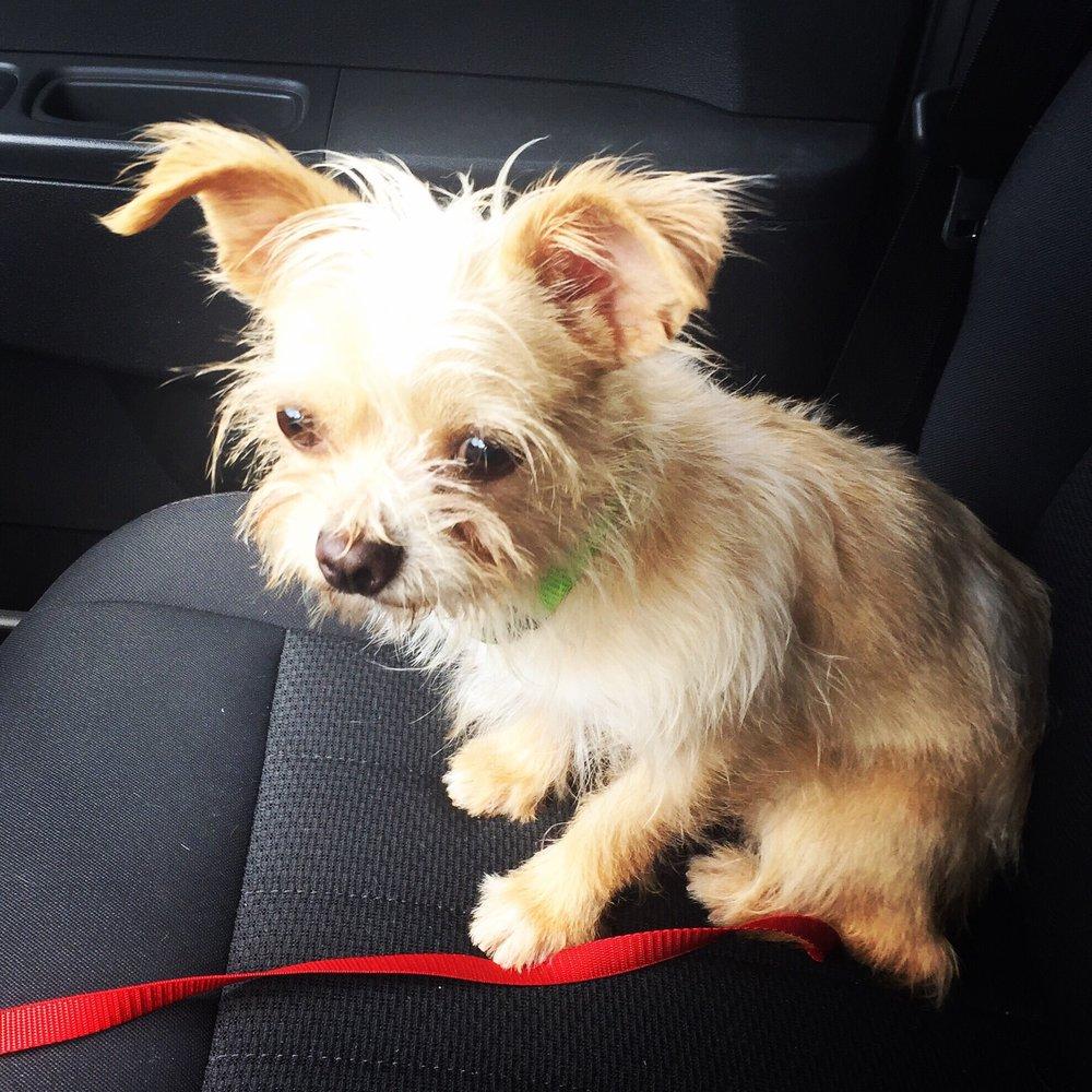 Atlanta Pet Rescue & Adoption CLOSED 16 s & 27 Reviews