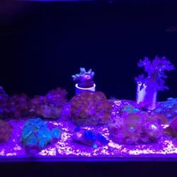 The Aquarium In Old Town Tienda De Mascotas 1001 E