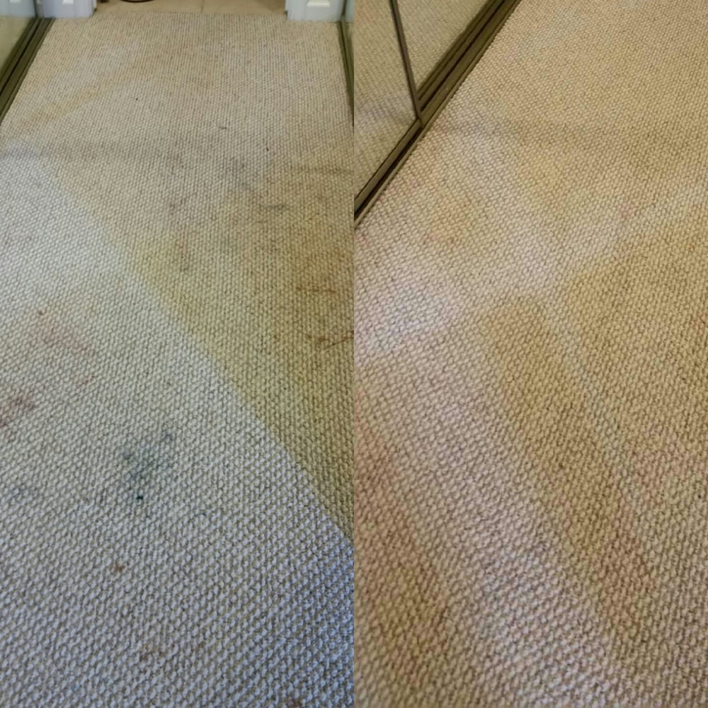 Dog Chewed Up Rug: My Dog Ransacked My Make Up Bag And Chewed Up A Blue Ink