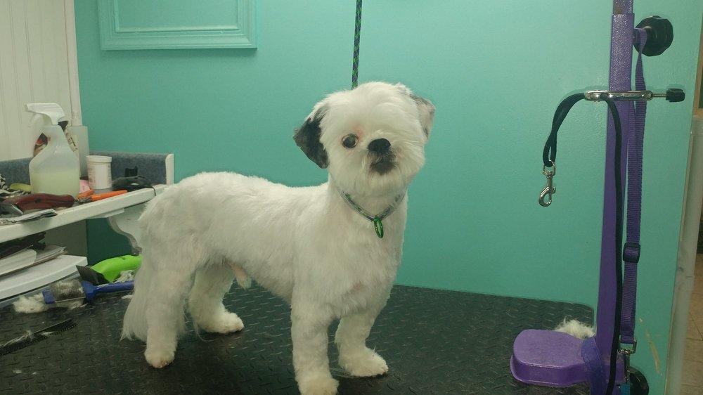 Terry's Top Dog Pet Salon: 4 Rosalie Ln, Aston, PA