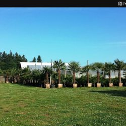 Photo Of Oregon Palm Nursery Woodburn Or United States