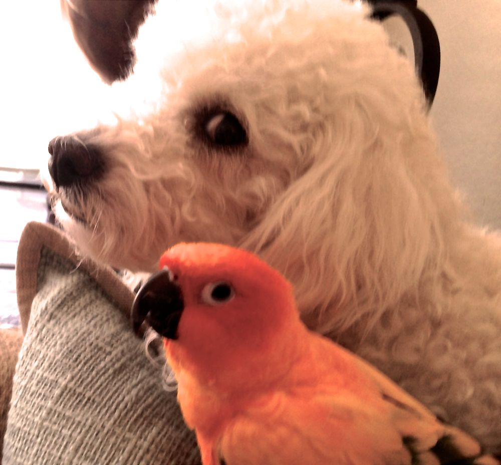 Auntie Cathy's Pet and Home Care Services: Tucson, AZ