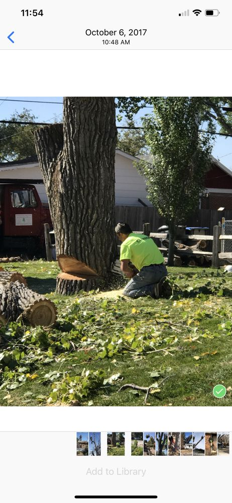 Wyoming Professional Tree Care: 10711 E Polo Plate, Cheyenne, WY