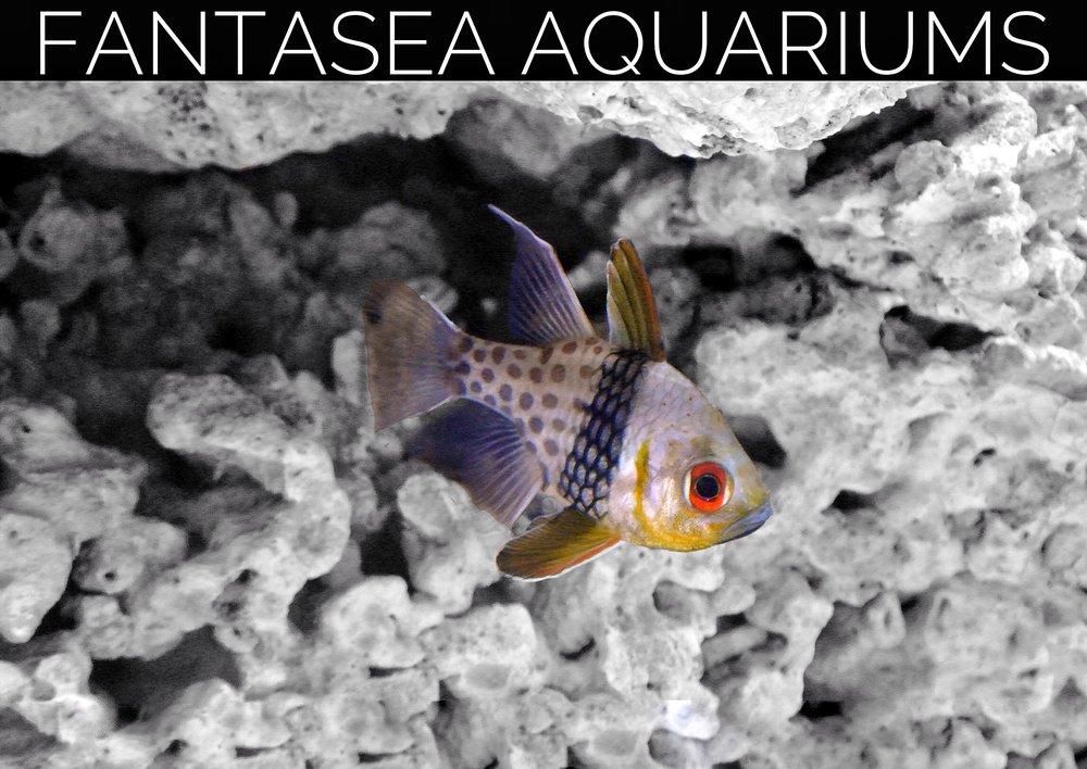 Fantasea Aquariums: Lothian, MD