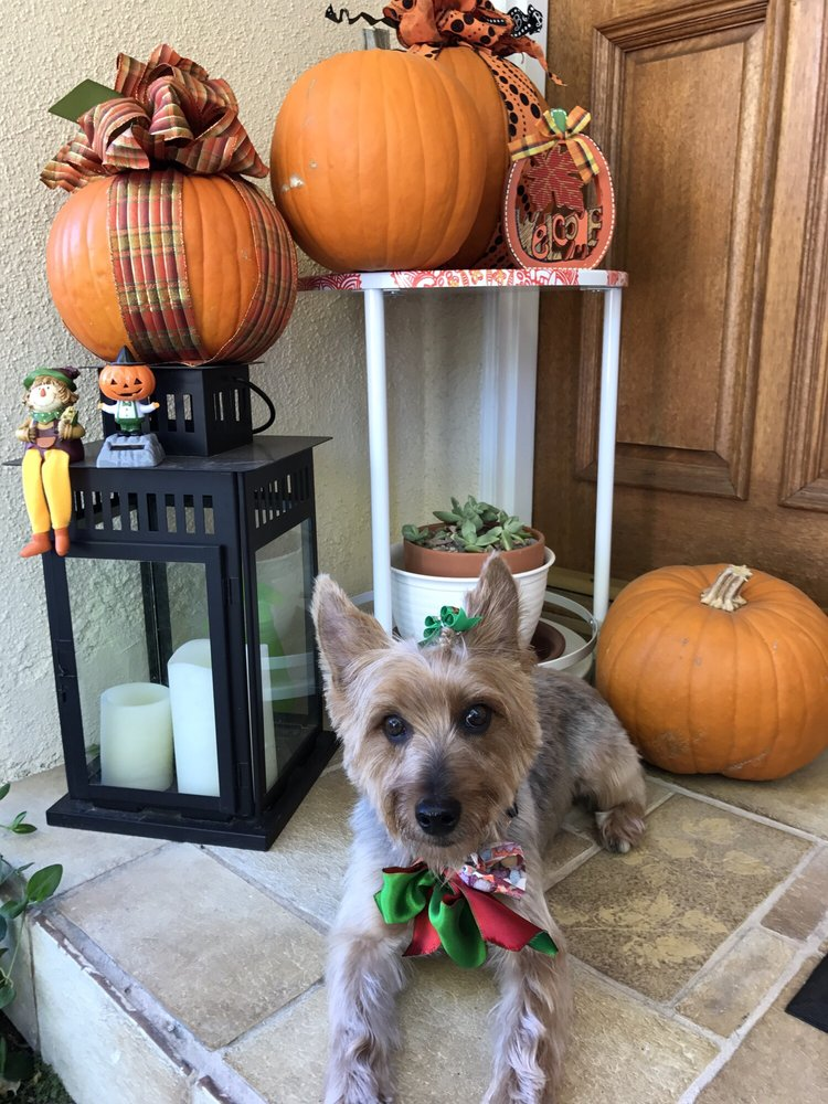 Puppy Castle Grooming Salon: 23731 Roscoe Blvd, West Hills, CA