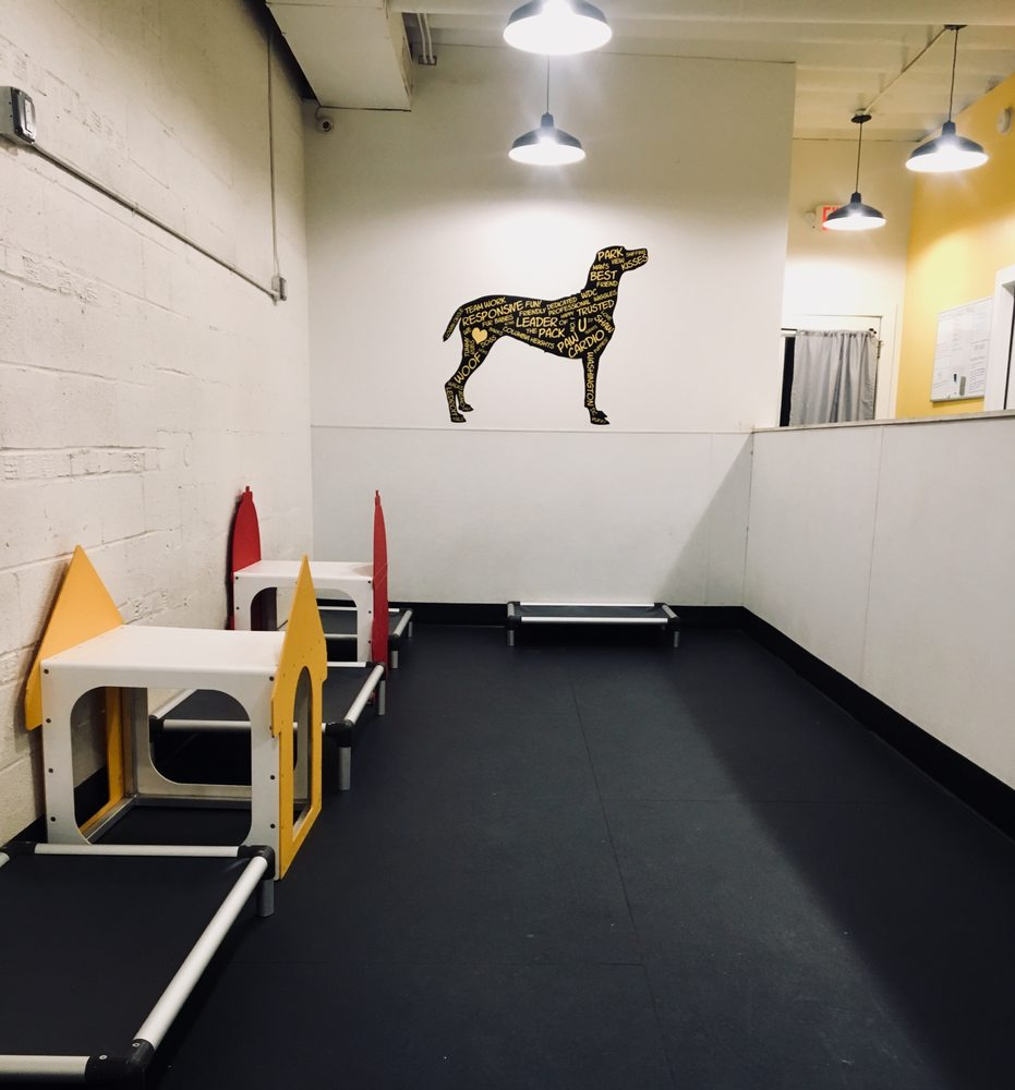 dog play room themed photo of district dogs washington dc united states large dog play room yelp