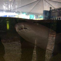 St Augustine Aquarium 11 Photos 11 Reviews Aquariums