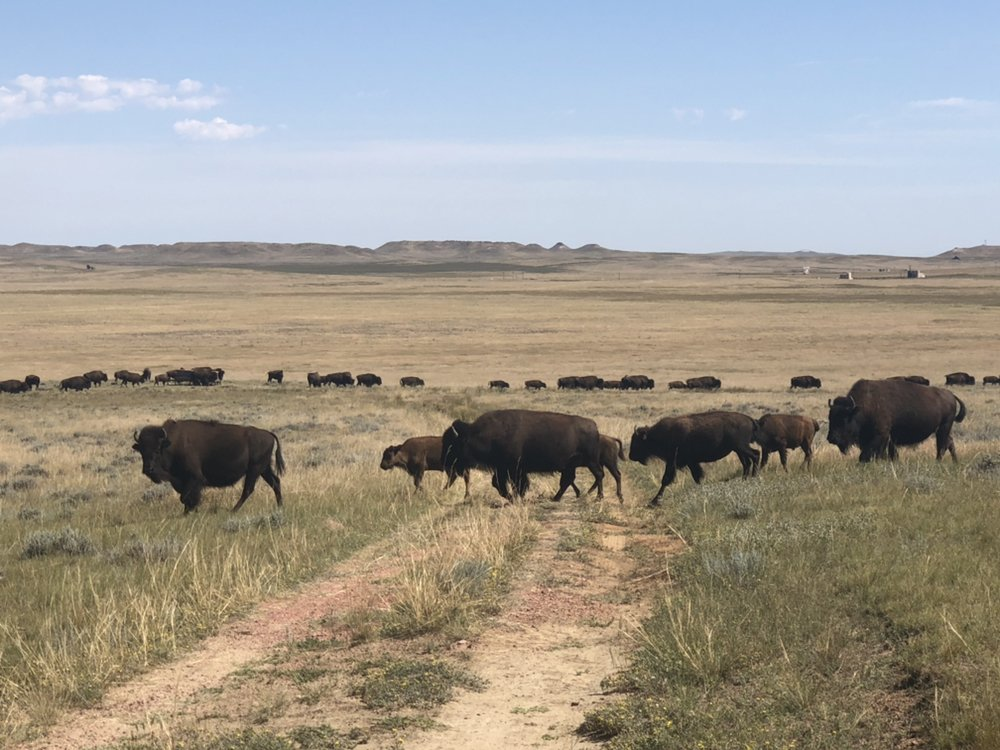 Durham Bison Ranch: 7835 State Hwy 59 S, Gillette, WY
