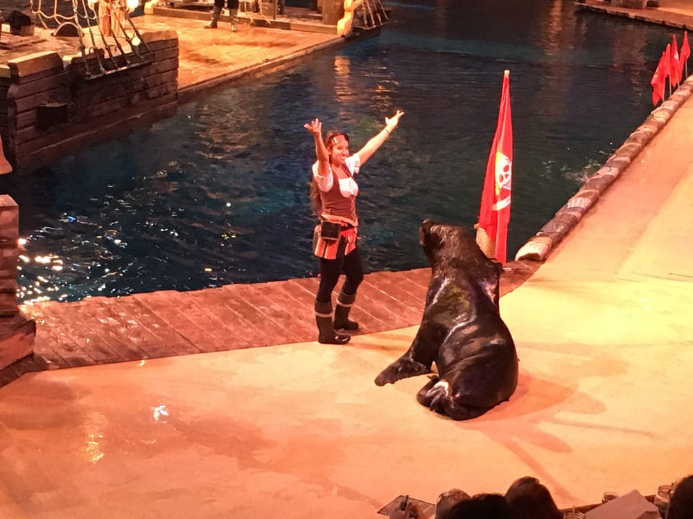 Image result for salty the sea lion pirates voyage