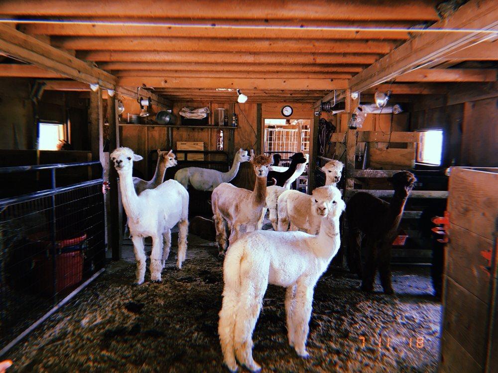 Alpacas Of The Heartland: 7016 County Rd 39, Fort Calhoun, NE