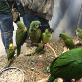 Yelp Reviews for Parrots of the World - 65 Photos & 66 Reviews