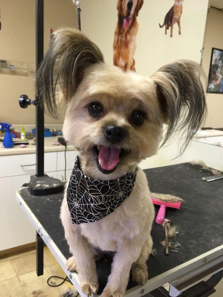 A-Plus Pet Grooming: 51 Crescent Blvd, Gloucester City, NJ