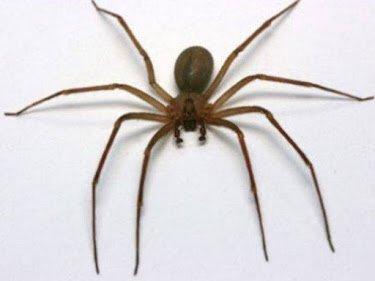 Antipest Termite & Pest Control: 3905 Hilltop Field Dr, Chester, VA