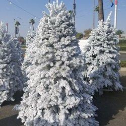 Tree Kings Christmas Tree Lot 8150 Lapalma Ave Buena Park Ca