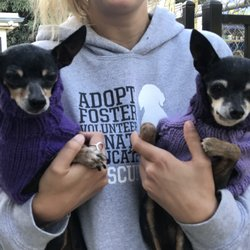 dog adoption santa barbara