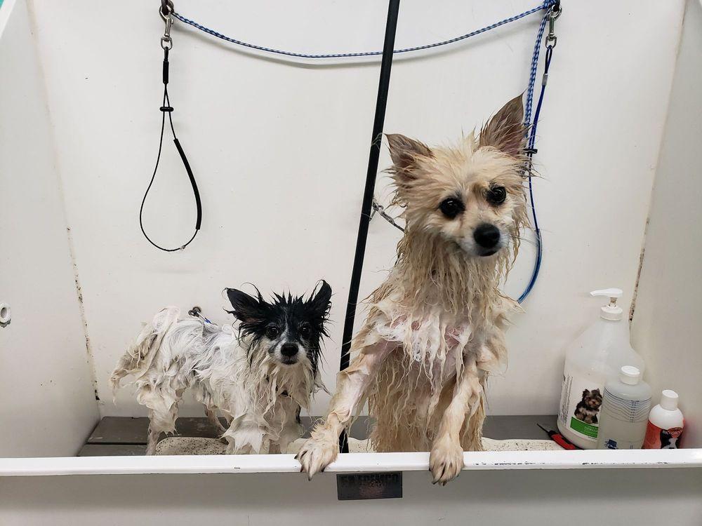 El Cajon Dog Wash & Grooming: 1137 N 2nd St, El Cajon, CA