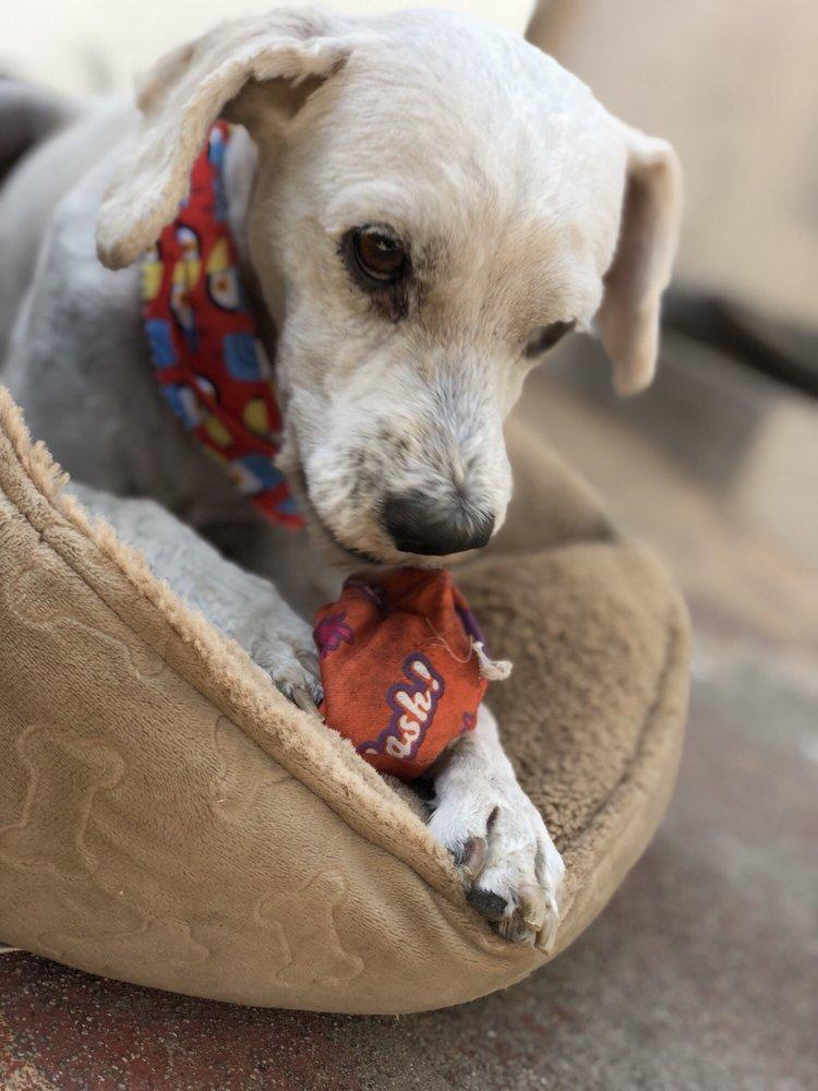 JMC Mobile Pet Grooming: Lawndale, CA