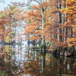 Reelfoot Lake State Park - 2595 Highway 21 E, Tiptonville, TN - 2019