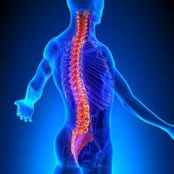 Findlay Chiropractic Chiropractors 8215 Northwoods Dr