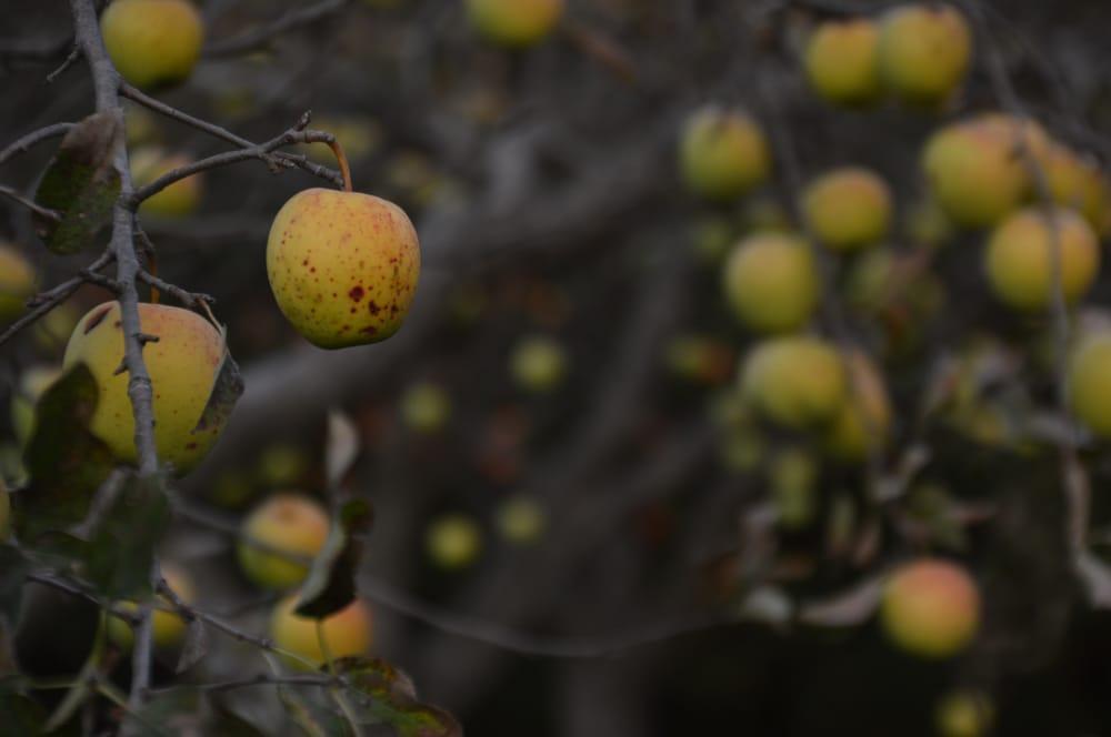 Fuggiti Segio Apple Orchard: 530 E Eagle Rd, Waterloo, IA