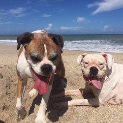 Pet Sitting Businesses In Vero Beach Fl