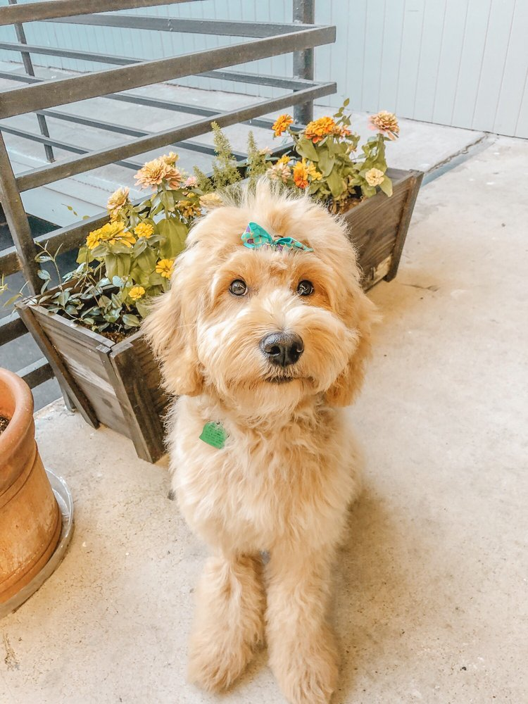 The Pet Barber: 1417 Richmond Ave, Houston, TX
