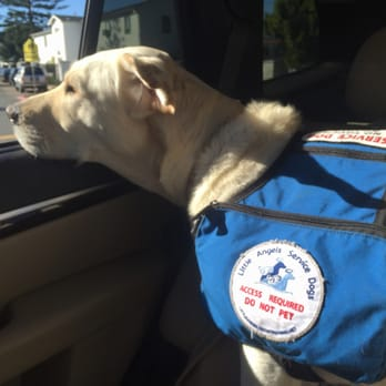 Service dog question?
