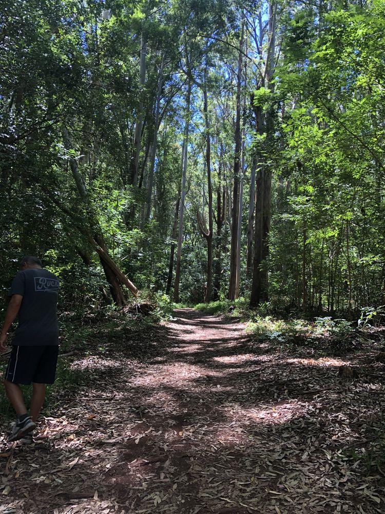 Makawao Forest Reserve: 260 E Kuiaha Rd, Haiku-Pauwela, HI