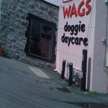 Wags doggie daycare self dogwash pet sitting 950 w 21st st photo of wags doggie daycare self dogwash norfolk va united states solutioingenieria Gallery