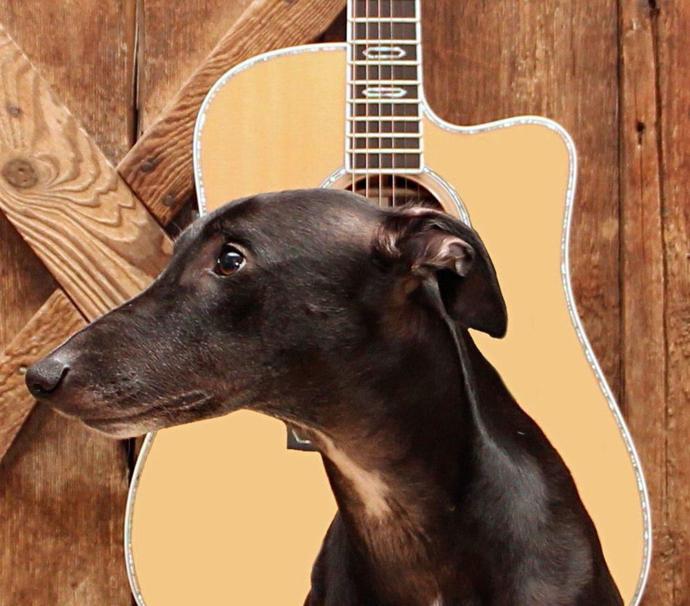 Running Dogs Music