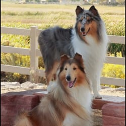 Lulu S Dog Grooming Reno Nv