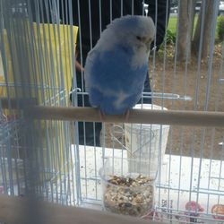 San Jose/Fremont Bird Mart - CLOSED - 14 Photos - Pet Stores - 344