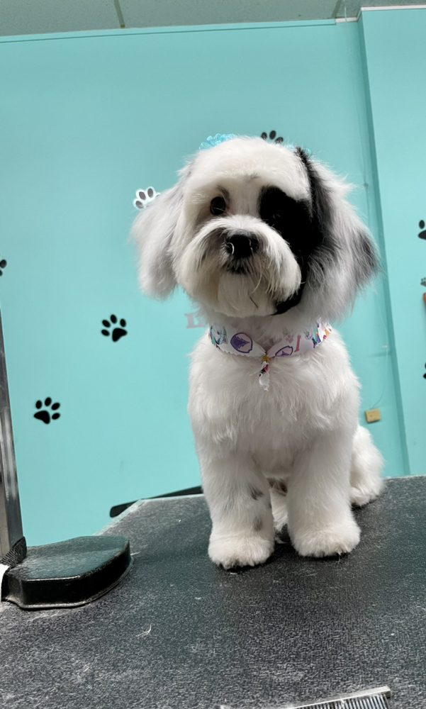 On The S'paw Pet Grooming salon